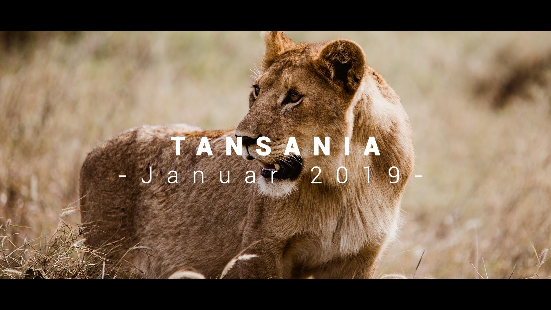 Reiseblog Tansania Marcel Kleusener Safari Tarangire Nationalpark